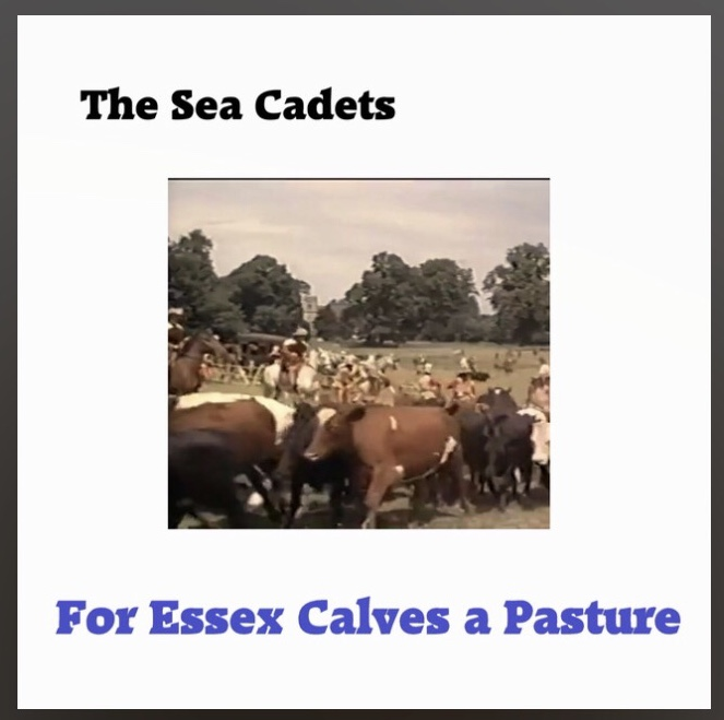 For Essex Calves a Pasture